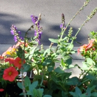 cropped-flowers